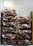 Caranguejo Imagem de Stock