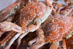Caranguejo alaranjado cozinhado para o alimento Fotografia de Stock Royalty Free