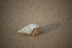 Caranguejo, areia, Imagem de Stock Royalty Free