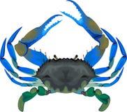 Caranguejo azul - ilustração do vetor no branco ilustração royalty free