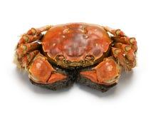 Caranguejo chinês cozinhado do mitene, caranguejo peludo de shanghai imagens de stock royalty free
