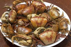 Caranguejo cozinhado imagem de stock