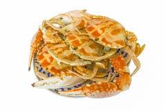 Caranguejo cozinhado Fotografia de Stock