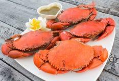 Caranguejo cozinhado Imagens de Stock Royalty Free