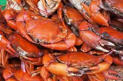 Caranguejo cozinhado do mar Foto de Stock