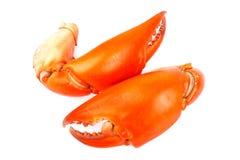 Caranguejo cozinhado do preto da garra isolado dentro no branco Foto de Stock