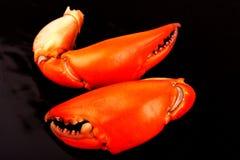 Caranguejo cozinhado do preto da garra isolado dentro no fundo preto Imagem de Stock Royalty Free