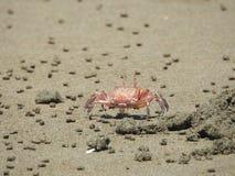 Caranguejo da areia que dispara ao redor na praia Imagens de Stock