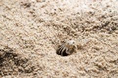 Caranguejo da praia Fotos de Stock