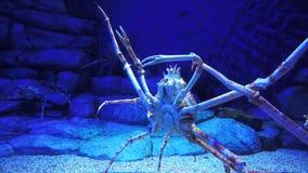Caranguejo de aranha filme