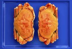 Caranguejo de dungeness cozinhado foto de stock