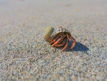 Caranguejo de eremita em Miami Beach Fotos de Stock Royalty Free