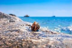 Caranguejo de eremita pequeno Fotografia de Stock