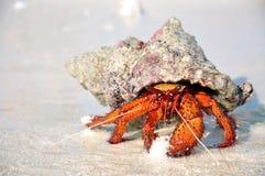 Caranguejo do eremita na areia branca Fotografia de Stock