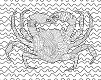 Caranguejo do mar com detalhes altos Foto de Stock