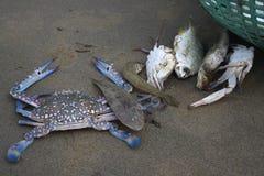 Caranguejo e peixes Fotografia de Stock Royalty Free