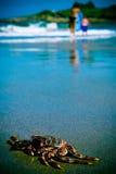 Caranguejo e povos na praia Imagem de Stock