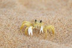 Caranguejo e praia amarelos Fotos de Stock