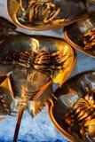 Caranguejo em ferradura fresco no gelo para a venda no mercado local em Sattahip, Tailândia Imagens de Stock Royalty Free