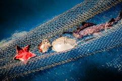 Caranguejo em ferradura, travamento da estrela do mar fotografia de stock royalty free