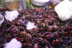 Caranguejo fresco imagem de stock