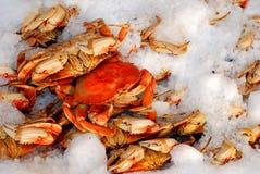 Caranguejo fresco no gelo Imagens de Stock