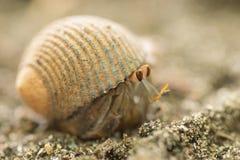 Caranguejo na areia fotos de stock