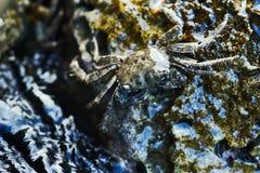 Caranguejo na costa rochosa do mar Mediterrâneo imagens de stock royalty free