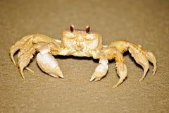 Caranguejo na praia Fotos de Stock