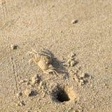 Caranguejo na praia do mar Fotos de Stock Royalty Free