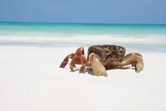 Caranguejo na praia, Tailândia fotografia de stock