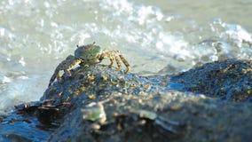 Caranguejo na rocha na praia vídeos de arquivo