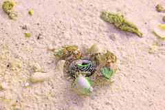 Caranguejo ou shell Imagens de Stock