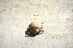 Caranguejo pequeno Fotografia de Stock