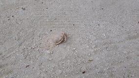 Caranguejo pequeno bonito da praia que anda na areia Natureza surpreendente Fundos bonitos da natureza filme