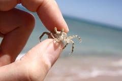Caranguejo pequeno em minha mão Fotografia de Stock