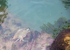 Caranguejo pequeno na água imagem de stock royalty free