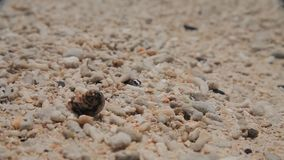 Caranguejo pequeno na areia. fim acima filme