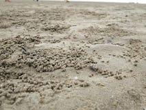 Caranguejo pequeno na praia imagens de stock royalty free