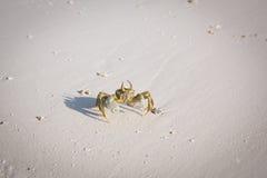 Caranguejo pequeno na praia fotos de stock