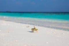 Caranguejo pequeno na praia imagem de stock