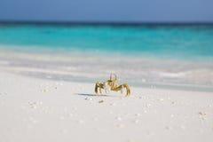 Caranguejo pequeno na praia fotos de stock royalty free