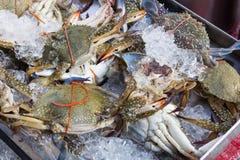 Caranguejo refrigerado do mar na bandeja no mercado Fotografia de Stock Royalty Free