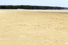 Caranguejo vermelho na praia Foto de Stock