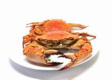 Caranguejo vermelho no fundo branco Dois ferveram os caranguejos do mar servidos comendo Imagens de Stock