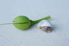 Caranguejo vivo na praia branca Tailândia da areia do shell Imagem de Stock