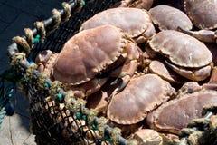 Caranguejos Foto de Stock