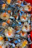 Caranguejos azuis Imagem de Stock