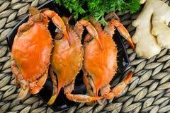 Caranguejos azuis cozinhados quentes com gengibre Caranguejos de Maryland Cozinhado e pronto para comer imagens de stock royalty free