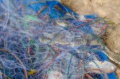 Caranguejos azuis prendidos na rede de pesca Fotos de Stock Royalty Free